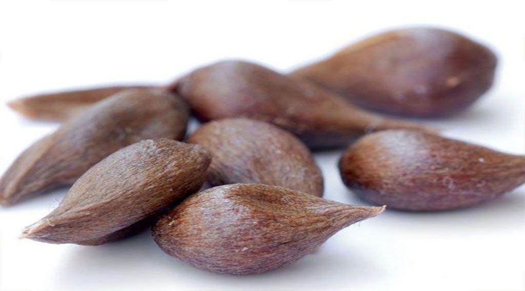 بِه دانه ( Cydonia oblonga) - گیاهان دارویی