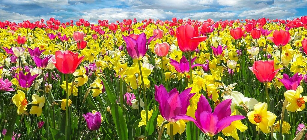 تدابیر درمانی فصل بهار با طب سنتی